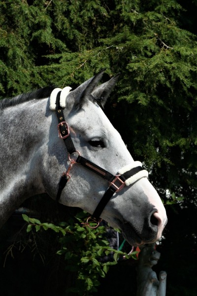 Deluxehorse Halfter Rose gold mit Fellimitat