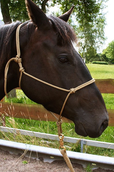 Brockamp Horse Man Halfter Profiqualität